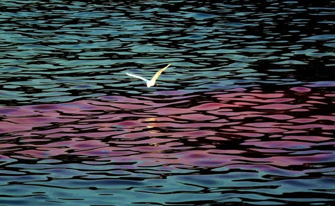 Thủy triều nhuộm đỏ bờ biển Quảng Đông