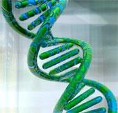 Virus khiến con người thông minh hơn?