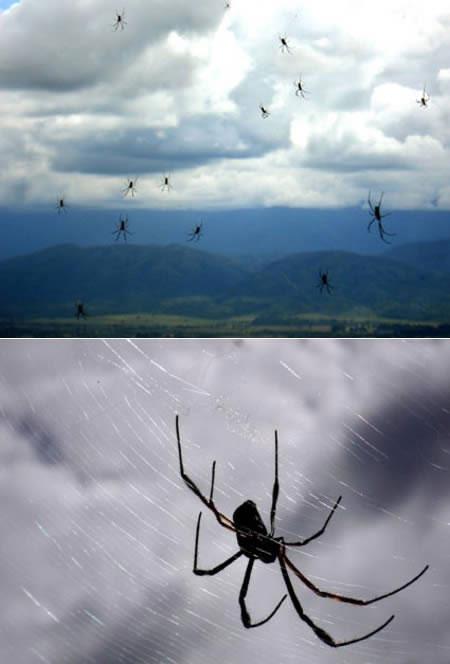 Bí ẩn những cơn mưa động vật kì lạ