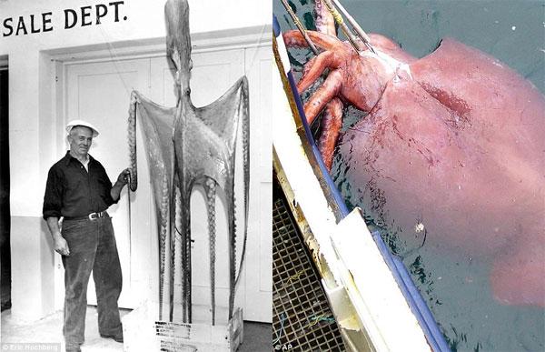 Hé lộ kích thước thực của các quái vật biển khổng lồ