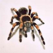 Video: Chuyện gì xảy ra nếu loài nhện biến mất?