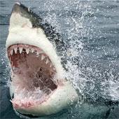"""Cưa điện làm từ răng cá mập: Cỗ máy """"siêu sắc bén"""""""