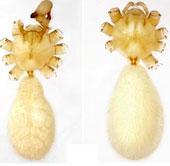 Việt Nam công bố 19 loài nhện mới