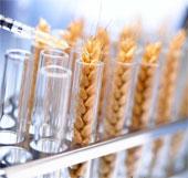 Đã tìm được cách khống chế sinh vật biến đổi gene