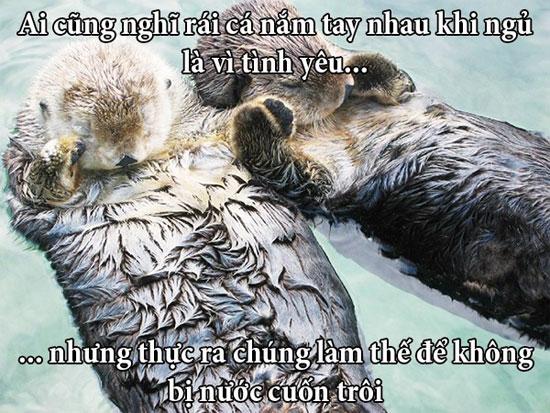 """Fun fact về chuyện yêu đương """"buồn cười"""" trong giới động vật"""