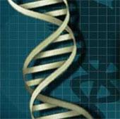 1/5 dân số thế giới mang gene thông minh, sống thọ