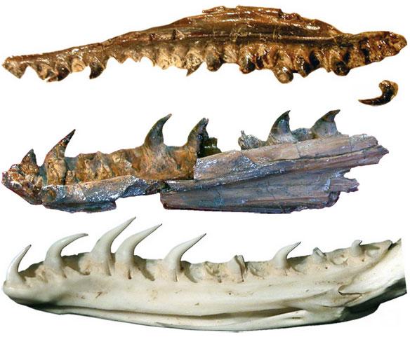 Phát hiện hóa thạch rắn cổ nhất