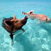 Những hòn đảo toàn động vật trên thế giới