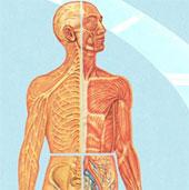 Điều gì sẽ xảy ra với cơ thể chúng ta trong năm 2015?