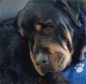 Video: Chó đau buồn khi anh chết