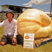 Bí ngô khổng lồ hơn 700kg