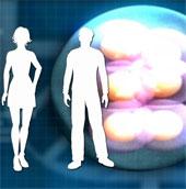 Anh tiến gần tới việc thụ tinh từ ADN của ba người