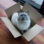 Mèo thích trốn trong hộp để giảm căng thẳng