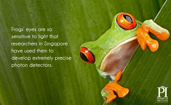 20 thông tin thú vị về ánh sáng có thể bạn chưa biết