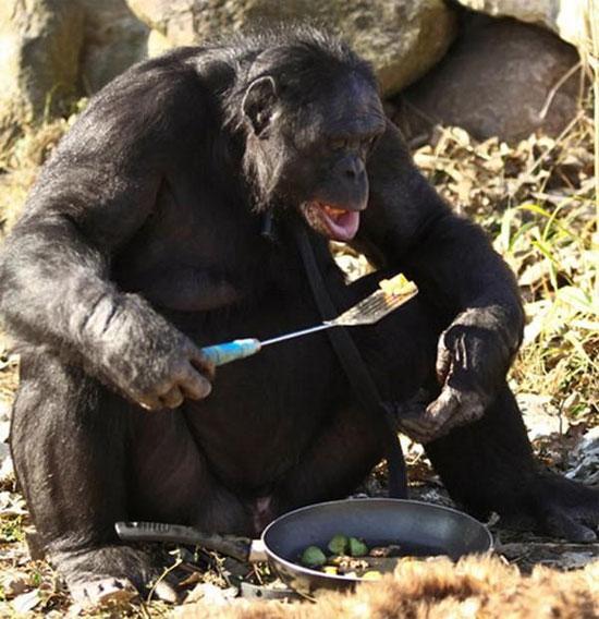 Những loài động vật có trí thông minh của con người