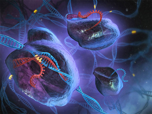 Câu chuyện về CRISPR: Từ vi khuẩn đến phát kiến vĩ đại của thế kỷ 21