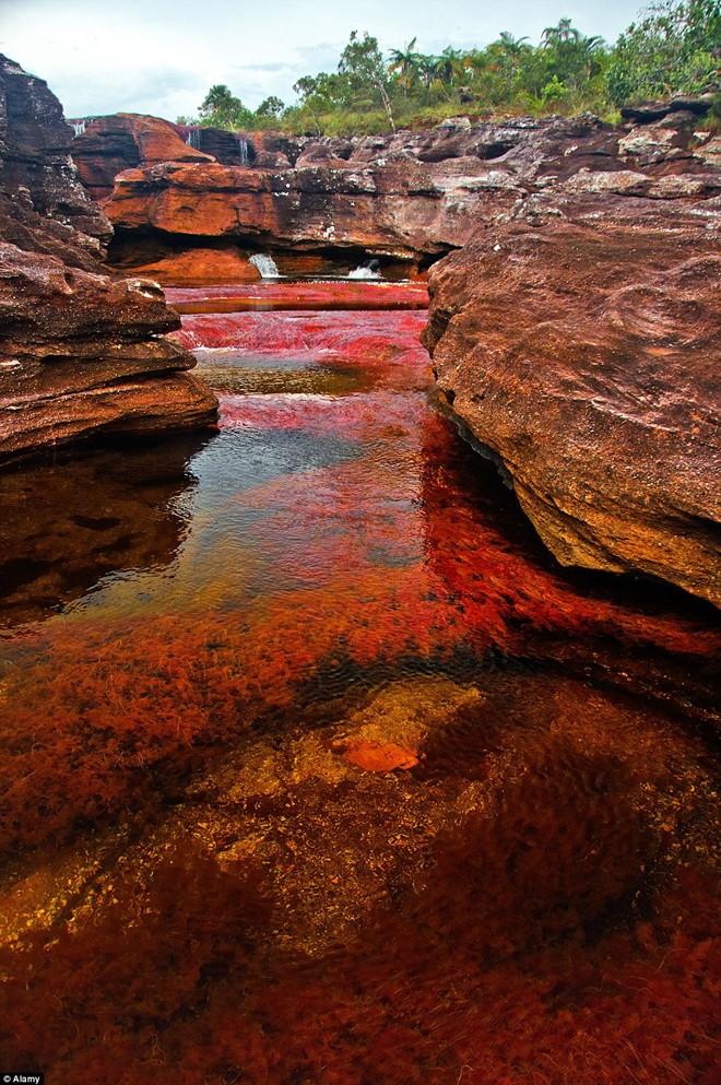 Ngỡ ngàng vẻ đẹp của dòng sông bảy sắc cầu vồng