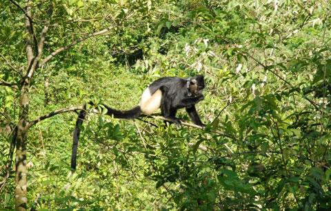 Việt Nam sắp có công viên động vật hoang dã