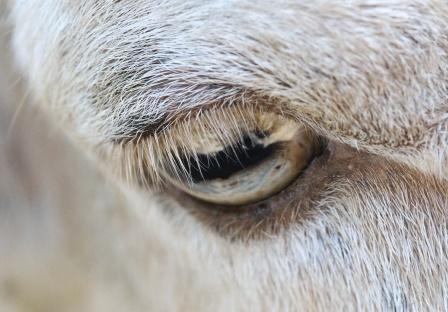 Mi mắt dài bao nhiêu là vừa