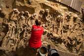 Hàng trăm bộ xương thời Trung Cổ dưới nền siêu thị Paris