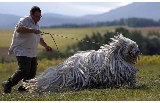 8 loài vật kì dị khó tin tồn tại trên đời