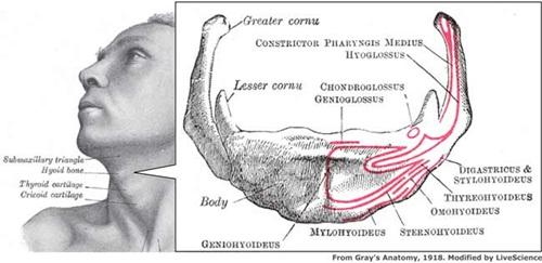 10 điều lý thú về bộ xương người