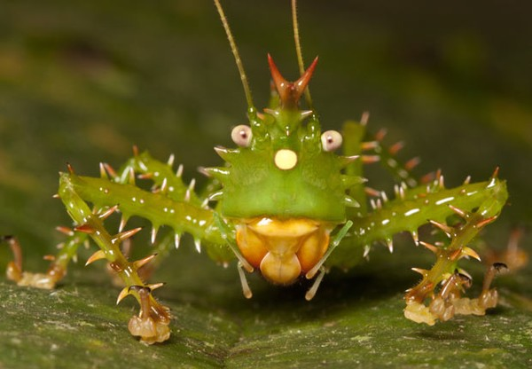 Những loài động vật kỳ quái bậc nhất trên Trái Đất