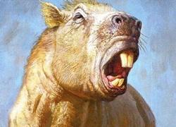 Phát hiện loài chuột lang to như trâu, khỏe như hổ