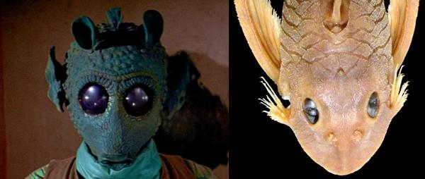 """Loài cá trê """"mắt long lanh"""" được đặt tên theo sát thủ Star Wars"""
