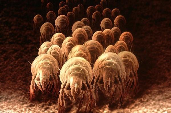 Khám phá ổ vi khuẩn đang ngủ chung giường với bạn