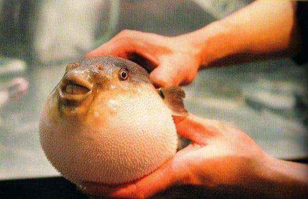 7 món hải sản phổ biến nhưng cực kì nguy hiểm