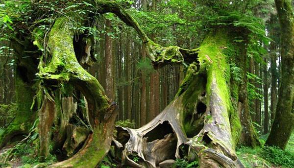 """Bí ẩn khu rừng """"Tam giác quỷ Bermuda"""" trên mặt đất"""