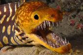 """6 loài """"thủy quái"""" có bộ hàm giết mồi trong nháy mắt"""