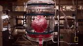 """Khám phá quá trình tạo ra quả tim đập """"thình thịch"""" trong phòng thí nghiệm"""