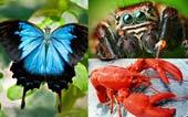 Tôm hùm, bướm và nhện có chung tổ tiên với nhau