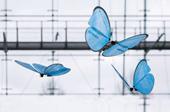 Đức chế tạo thành công robot bướm giống như thật