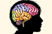 Nghèo đói có thể ảnh hưởng đến sự phát triển não