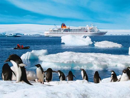 Nhiệt độ Nam Cực cao kỷ lục, đạt 17,5 độ C