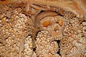 """Bộ xương hóa thạch lâu đời tự mọc hàng nghìn """"chiếc răng"""""""
