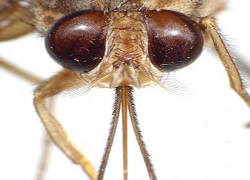 7 loài sinh vật nhỏ bé nhưng gây nguy hiểm chết người