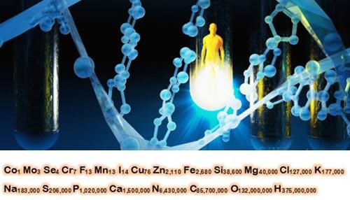 Công thức hóa học của cơ thể người