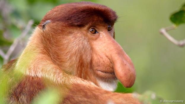 Động vật và những điều phi lý ... có thật