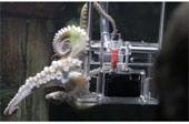 Đào tạo bạch tuộc thành nhiếp ảnh gia đầu tiên trên thế giới