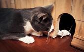 """Vì sao mèo thích tha """"chiến lợi phẩm"""" về nhà?"""