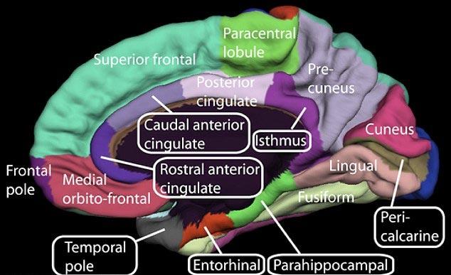Thuốc tránh thai có thể gây teo não?