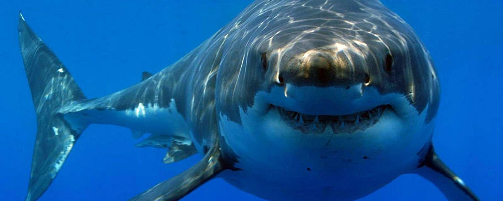 """""""Nhớ dai"""" và """"khôn"""" như cá mập"""