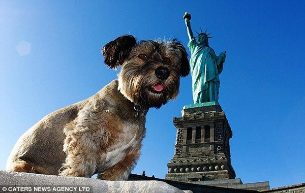 """7 điều luật bảo vệ loài chó """"khó tin"""" trên thế giới"""