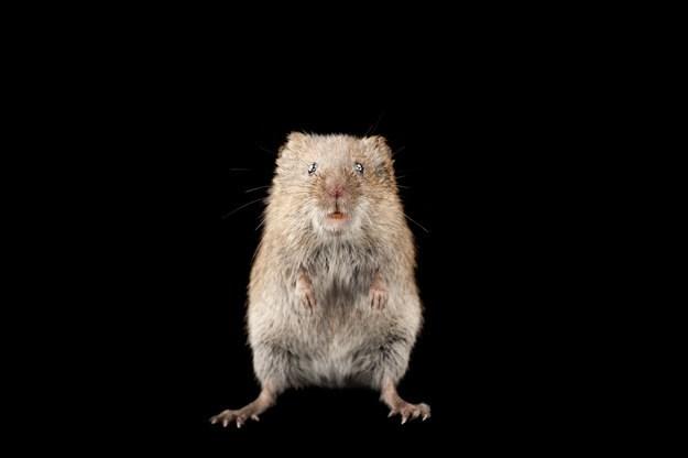 Khám phá những khả năng khó tin của động vật