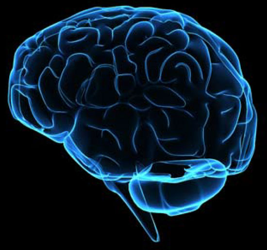 """10 điều """"thú vị nhưng sai bét"""" về não bộ con người"""