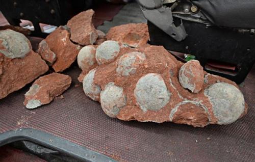 Phát hiện 43 hóa thạch trứng khủng long ở Trung Quốc
